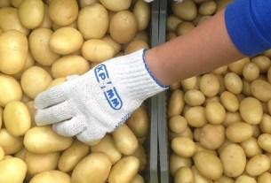 картофельный союз, мини-картофель, калибровка картошки, АКОРТ