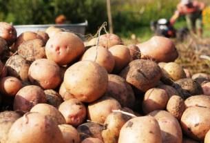 Егор Редин, штрафы за картофель , выращивания картофеля