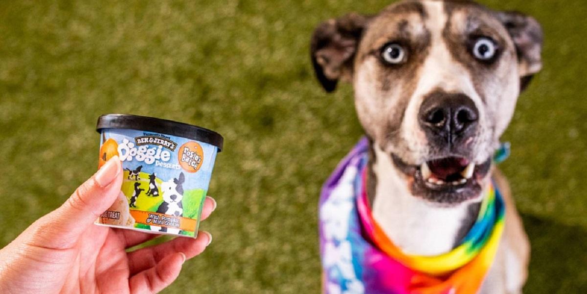 Ben & Jerry's, мороженое для собак, США, Doggie Desserts