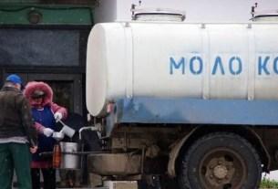 Вера Баданина, Псковская область, молоко с лейкозом, коровы с лейкозом, молоко во дворе