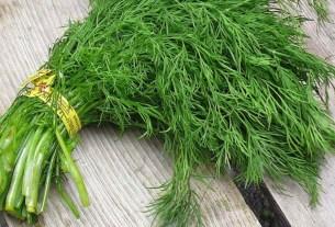 силиконовый укроп, импортные семена, Матвиенко