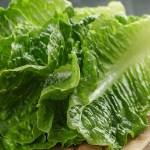Волгоградская область, салат-латук, живые личинки, цветочный трипс