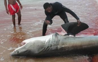 Африка, контрабанда, акульи плавники,морепродукты, морской гребешок, морские деликатесы, TRAFFIC