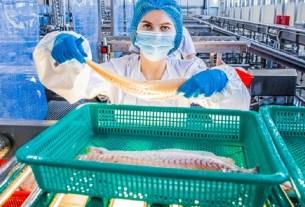 «Русский минтай», переработка, маркировка рыбы, MSC, контроль качества