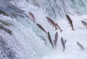 Нидерланды, нерест, рыба, шлюз, «дверной звонок» для рыб