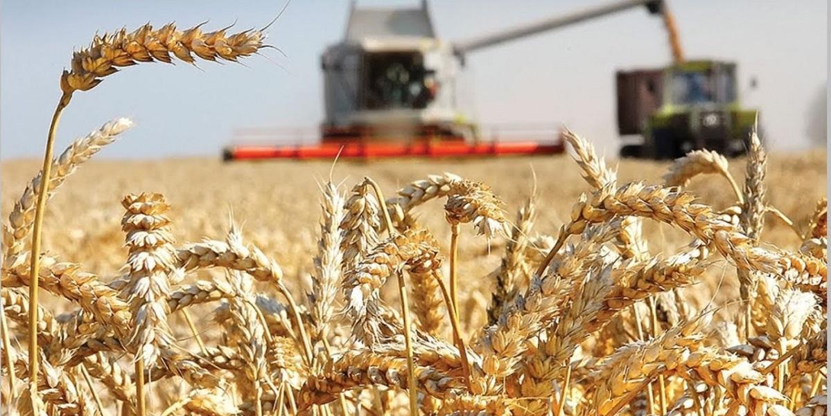 Зерно, уборка урожая, ДГТУ, исследования, вибрация, комбайны, пшеница, Дмитрий Рудой, Татьяна Мальцева