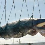 Правительство РФ, законопроект, добыча китов, запрет, Виктория Абрамченко