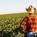 ГМО, рапс, Канада, фермерство