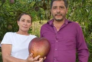 Колумбия, самый большой манго, рекорд Гиннесса,