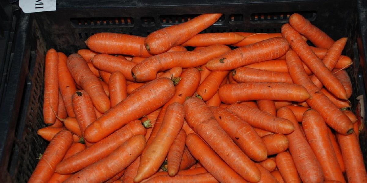 цена морковки, морковь дорогая, Михаил Глушков