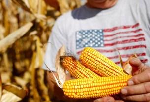 ГМО продукты, давление, американский интерес, кукуруза