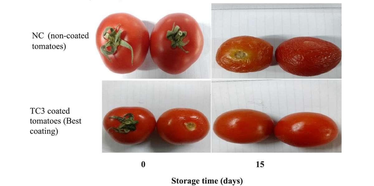 биопленка, биопокрытие, белковый изолят, помидоры