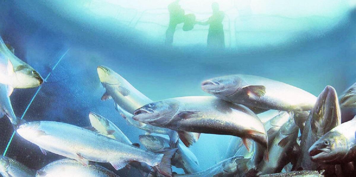 AquaMaof Aquaculture Technologie, Росрыболовство, семга, наземные заводы, индустриальная аквакультура
