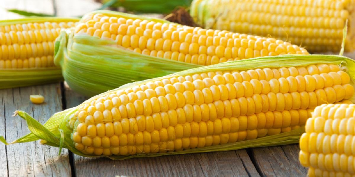 ГМО-кукуруза, Dabeinong, ГМ-кукуруза DBN9936