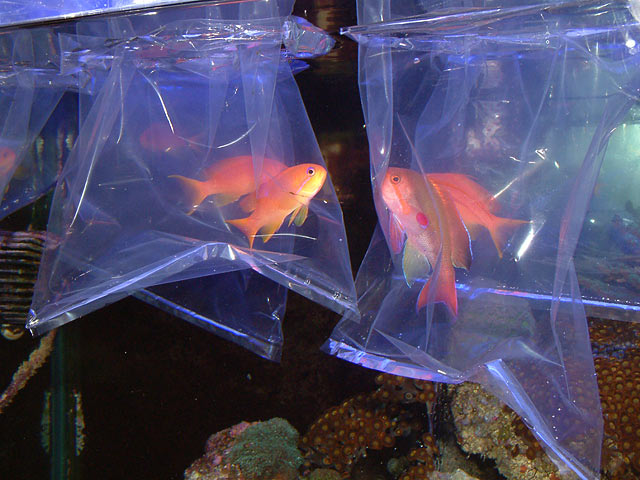 Image result for fish acclimatisation
