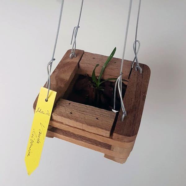 Aufhänger für Orchideenkörbchen