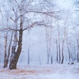 The Dreaded Weather: Fibromyalgia's Nemesis