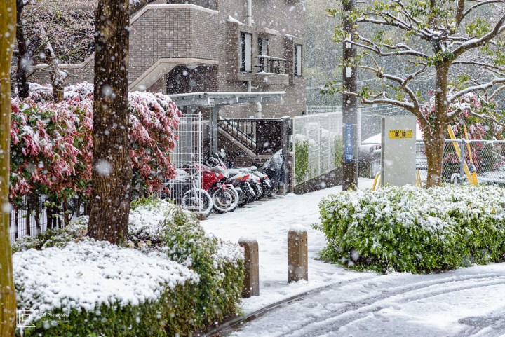 Snowing in Yokohama, Tsuzuki-ku, Japan, March 2020