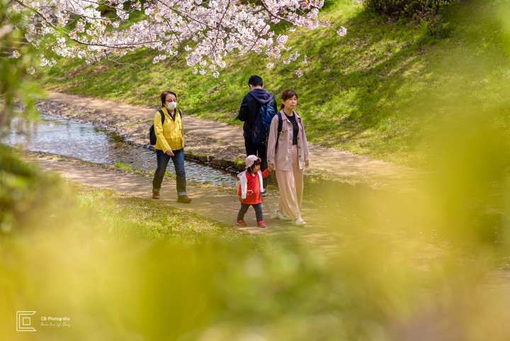 Sakura scenery in Yokohama, Japan. Mother and daughter enjoying quality time under cherry flowers in full bloom. Image taken by Cristian Bucur Photographer in Tokyo