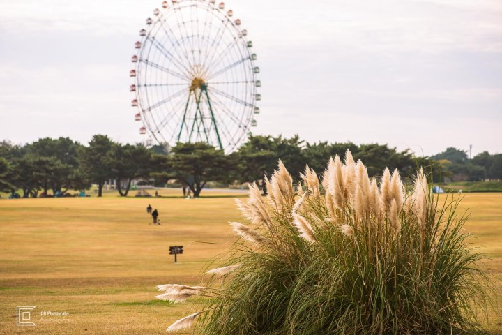 Ferris Wheel seen from the opposite side of the Grassland Area in Hitachi Seaside Park.