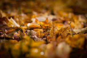 Outono Europeu . Alemanha (Foto Jeremy Fairbrass)