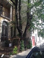 copacul care a inghitit un gard - bucuresti (1)