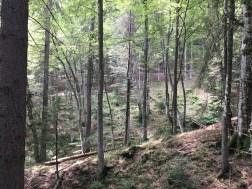 peisaje trasu Gura Diham - Poiana Izvoarelor