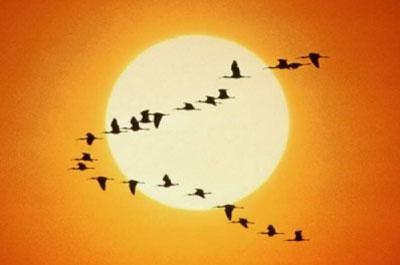 El vuelo de los gansos