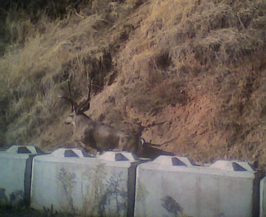 buck11_15711515856_o-crop
