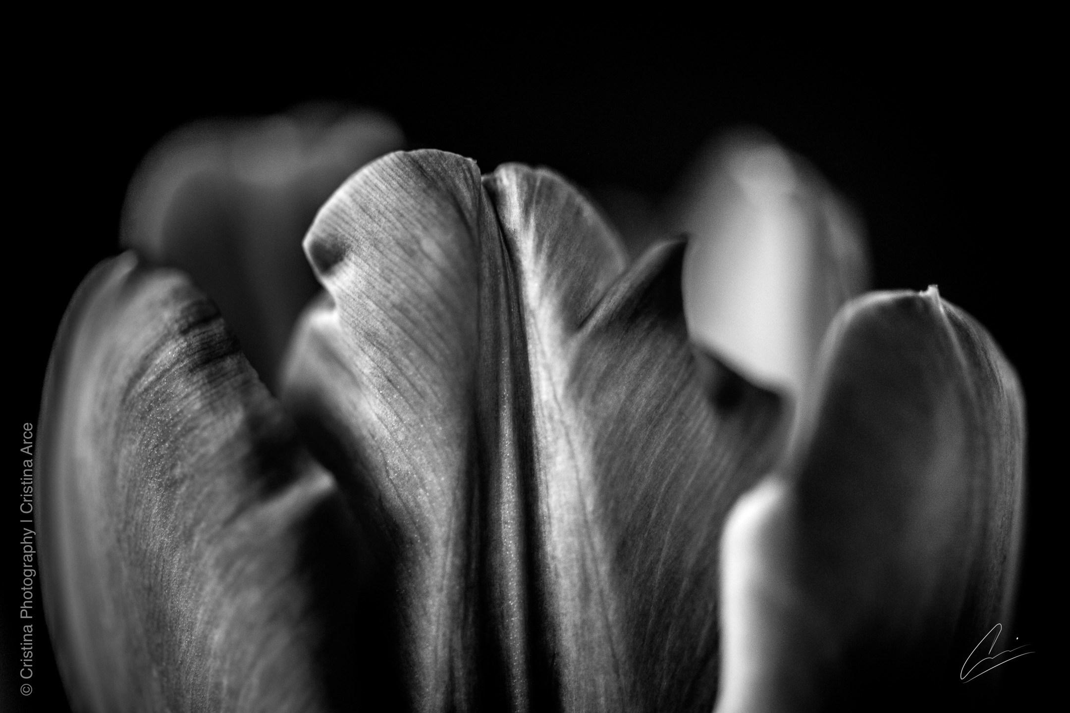 © CRISTINA PHOTOGRAPHY | CRISTINA ARCE