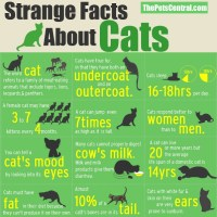 17 Interesting Facts About Cats
