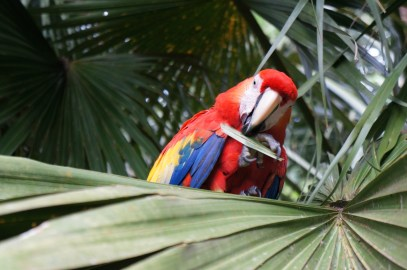 Carlotta, resident parrot
