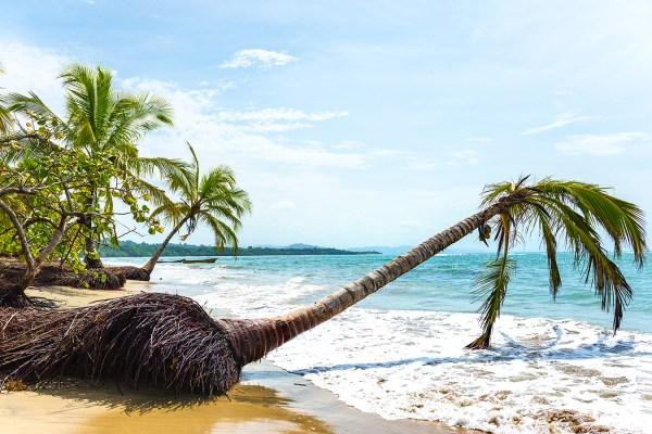 2016_cristinaphotography_fineart_costarica_limon_beach_palm