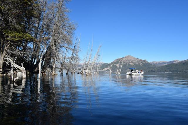 DSC 0040 Copy - Un bosque argentino, de atractivo turístico a potencial causa de un tsunami