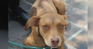 Adoptan a 8 perros a través de Facebook, en Pachuca