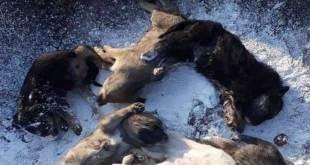 Edil llama a denunciar intoxicación de perros en Pachuca