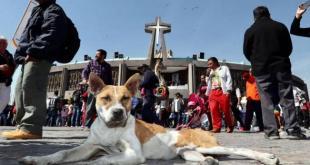 Cientos de perros son abandonados por peregrinos en la Basílica