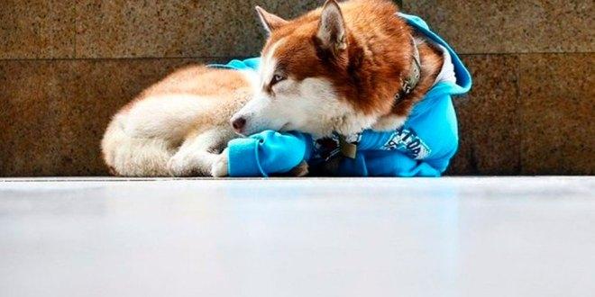 El perro que diario espera a su dueña por 8 horas afuera de su trabajo