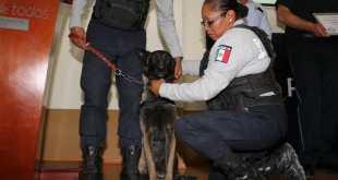 Mascotas de Pachuca ya pueden ser registradas en un padrón municipal