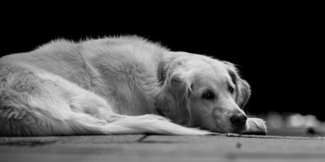 Mueren mascotas abandonadas por pandemia en China