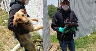 Rescatan a 16 perros abandonados de ser sacrificados en Tizayuca