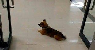Perro esperaba a su dueño en hospital; no sabe que murió de coronavirus