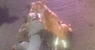 Perro custodia el cadáver de su dueño asesinado