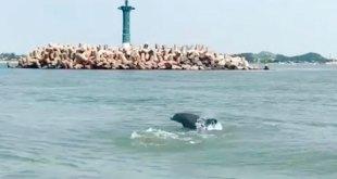 VIDEO: Captan a delfines en Boca del Río, Veracruz