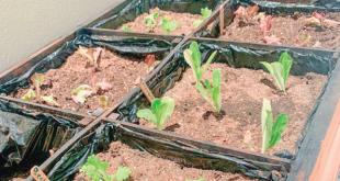 Inicia tu huerto urbano en casa con Planteate Garden