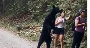Oso sorprende a paseantes en un parque; se toman selfie