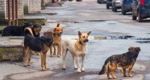 Acusan aumento maltrato animal Tizayuca