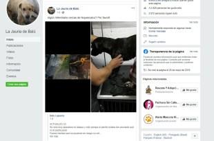 Ignoran alcaldía Pachuca maltrato animales