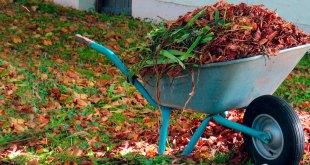 Multas invadir áreas verdes tirar desechos jardinería Pachuca
