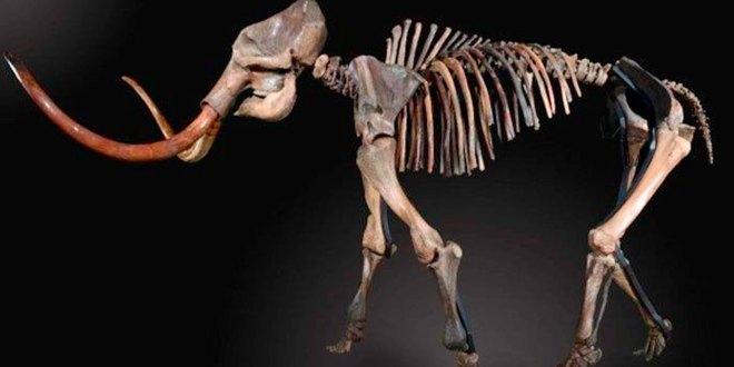 Albergará Centro Cultural Singuilucan osamenta mamut
